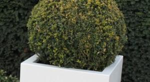 hoogglans plantenbak